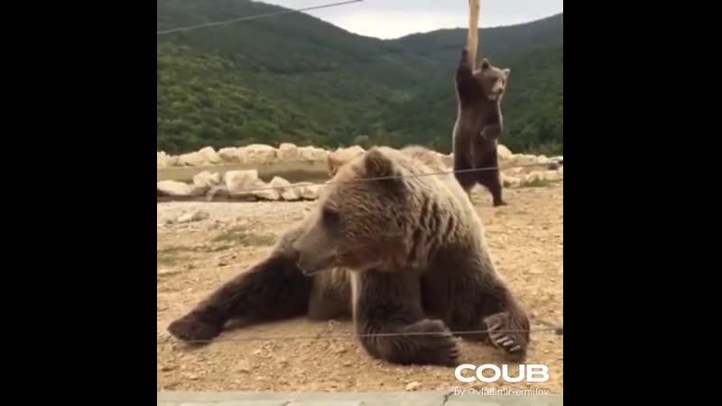 Lap dance you can't bear