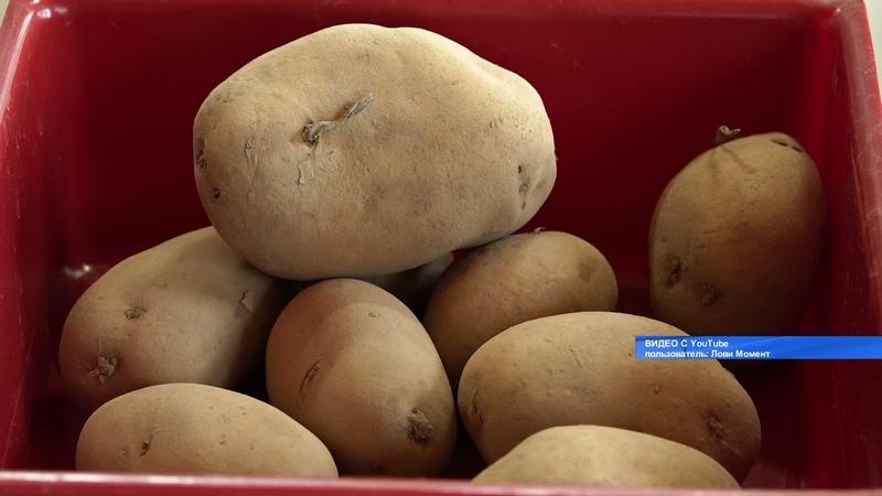 В 6 раз больше картофеля Российские учёные создали вертикальную ферму Абакан 24