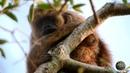Мир Приключений - Дикие животные Пантанала. Обезьяны ревуны и капуцины. Гигантские выдры и ягуары.