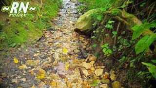 ЛЕСНОЙ РУЧЕЙ - Журчание Воды. Шум Ручья, Звук Ручья. Источник в Лесу - Звуки Природы | 🎧