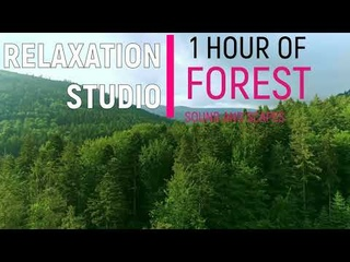 This FOREST sound and HD video will help you relax and sleep... Try to turn it on and relax