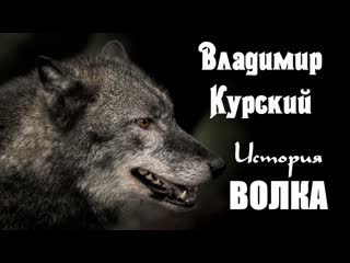 ПРЕМЬЕРА КЛИПА!ВЛАДИМИР КУРСКИЙ-ИСТОРИЯ ВОЛКА.