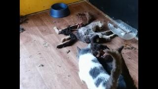 Лютый треш в догхантерском приюте для кошек