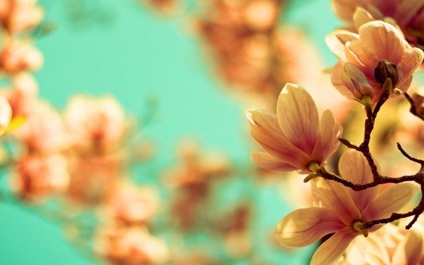 spring wallpaper iphone - HD 2880×1800