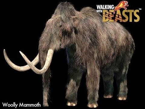 TRILOGY OF LIFE - Walking with Beasts - Woolly Mammoth (Mammuthus primigenius)