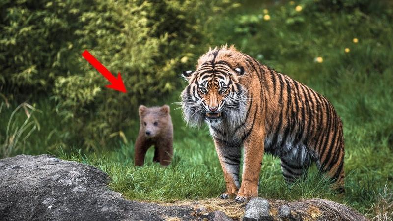 ЦЕПЛЯЯСЬ когтями в мужчину только что ОСИРОТЕВШИЙ медвежонок понимал что он единственная надежда