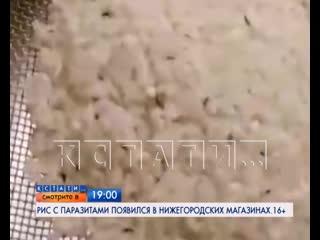 АНОНС: Рис с паразитами появился в нижегородских магазинах