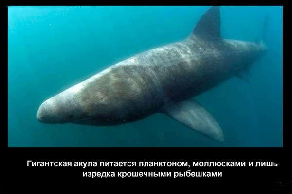 валтея - Интересные факты о акулах / Хищники морей.(Видео. Фото) 3OjHJvXz_2c