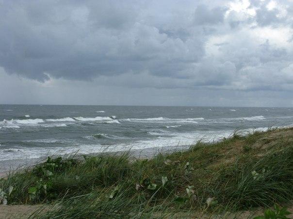 Анастасия Гарипова: Балтийское море. Куршская коса