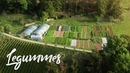 BEAUTIFUL Farm on a STEEP SLOPE in Switzerland Legummes