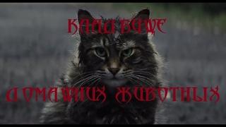 Кладбище домашних животных/Дикий СТРАХ!