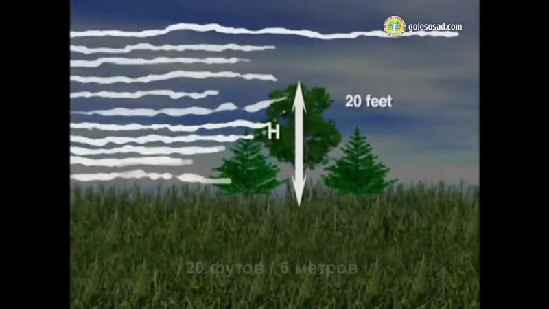 АГРОгородок ЗЕМЛЕДЕЛИЕ Ветрозащита с помощью деревьев 720p