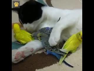 Трогательное видео о дружбе животных