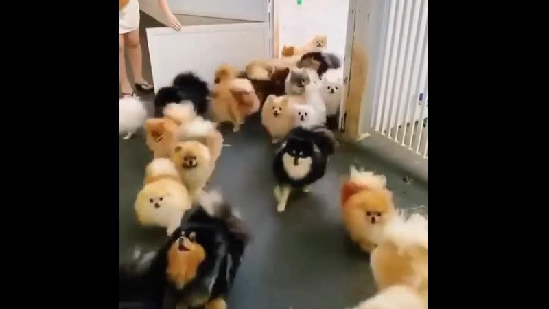 Собачки бегут