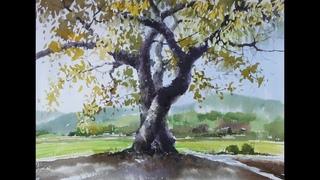 choeSSi art studio고목나무그리기How to paint Old tree 풍경기본/수채화, 水彩画watercolor