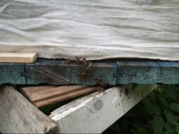 Пчеловодство Занавеска от воровок