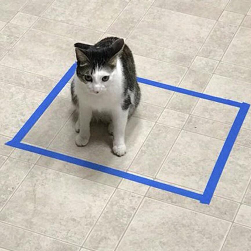 igswwZYRs9o - Новая фишка для котов