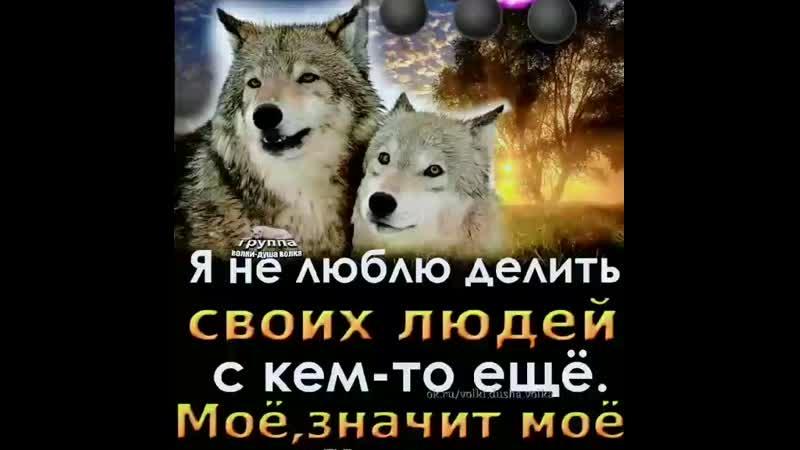 VID_55120305_060814_024.mp4