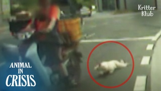 Dog Hanging By A Motorbike Is Dragged Around On The Road (Part 1) | Animal in Crisis EP267