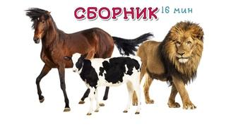Сборник Мультфильмов - Учим Животных - Развивающие Мультики для Детей
