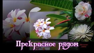 Прекрасное рядом Мир цветов нежен и  чудесен  Beautiful near