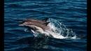 Прогулка с дельфинами в Балаклаве, Севастополь 2020!