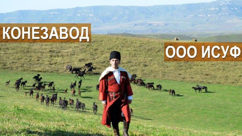 Кабардинские лошади. Рассказ о хозяйстве ООО Исуф. Кабардино-Балкария.