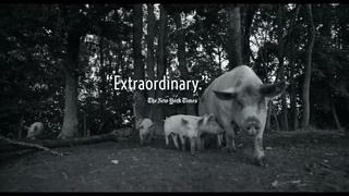 Гунда / Gunda (трейлер) Фестиваль документального кино ЧЕСНОК 2021