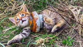 Животные Просят Людей Помочь! ТОП 10 Случаев Спасения Животных Снятых на Камеру