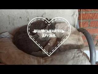 Сонные котята  Лелик и Боня