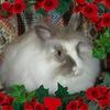 "Кролики ""Mashenka's Collection"""