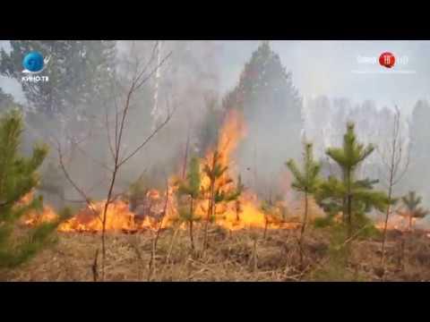 04 06 2018 В Охинских лесах вспыхнул первый в этом году крупный природный пожар