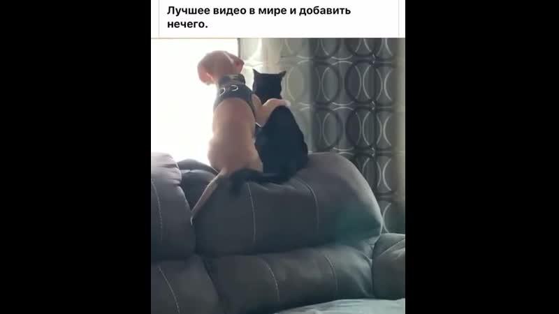 VIDEO 2020 04 29 17 02