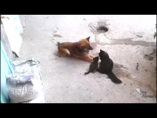 Кошка знакомит своих котят с лучшей подругой, живущей по соседству