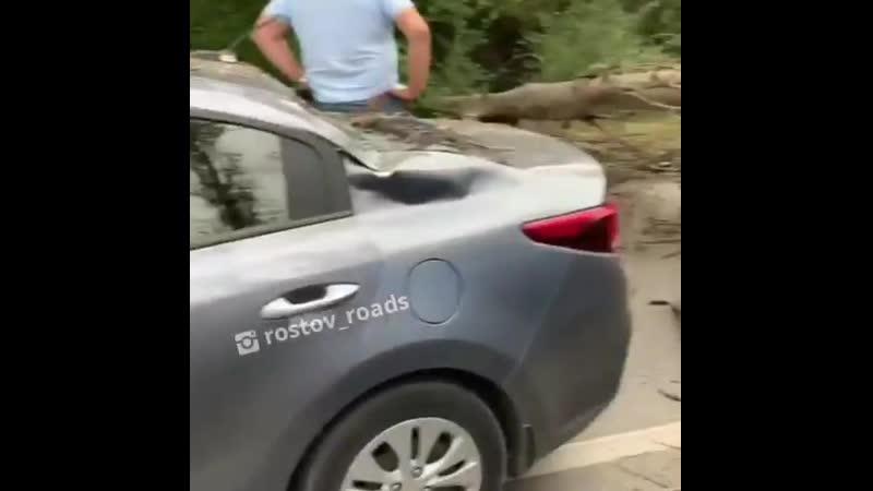 на Вавилова на дорогу упало дерево придавило несколько авто дорога полностью заблокирована 18 09 19 Это Ростов на Дону