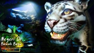 Rainforest Cave Clouded Leopard Habitat 🐆   Planet Zoo Speed Build - Southeast Asia Pack