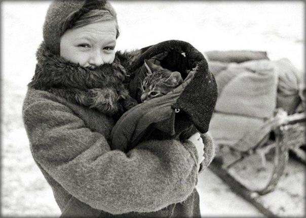 Моя бабушка всегда говорила, что тяжёлую блокаду и голод и я моя мама, а я её дочь, пережила только благодаря нашему коту Ваське Если бы не этот рыжий хулиган, мы с дочерью умерли бы с голоду