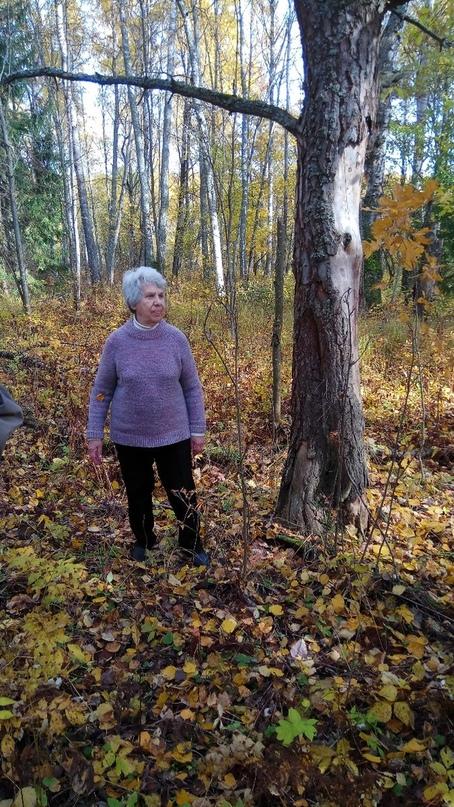 Под этой сосной в январе 1942 года гитлеровцы бросили тело замученной ими Лизы. Фото из личного архива Татьяны Осиповой.