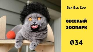 Говорящие коты / Смешные животные / Подборка 034
