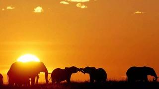3 HOURS Best Relaxing Music | Africa | Shaman | Background, Relax, Sleep, Study, Meditatio