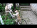 смішне відео про котів