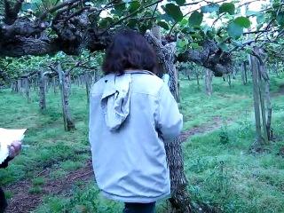 Kiwi Actinidia deliciosa EN SALIDA A TERRENO