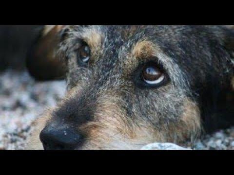 Як вирішується проблема безпритульних тварин у Василькові