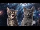 Песня мяу мяу часовая версия Space Cats 1 hour version
