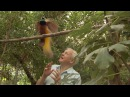 Bird interrupts David Attenborough - Attenboroughs Paradise Birds - BBC Two