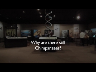 Почему шимпанзе не превратились в людей Отвечает Ричард Докинз