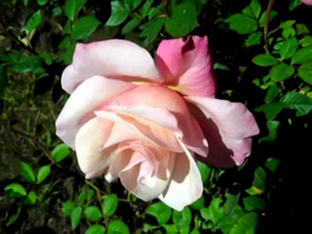 Mario Lanza Judith Raskin - ONLY A ROSE from The Vagabond King