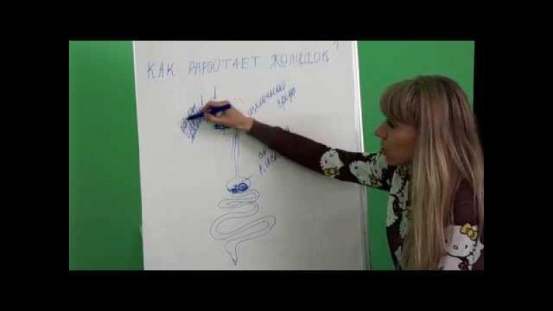 Ольга Анчина Как работает желудок