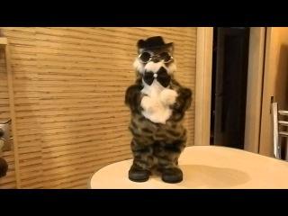 """кот поет и танцует """"Ну где же ты любовь моя"""""""