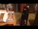Реакция собаки на исполнение хозяевами песенки Happy Birthday!